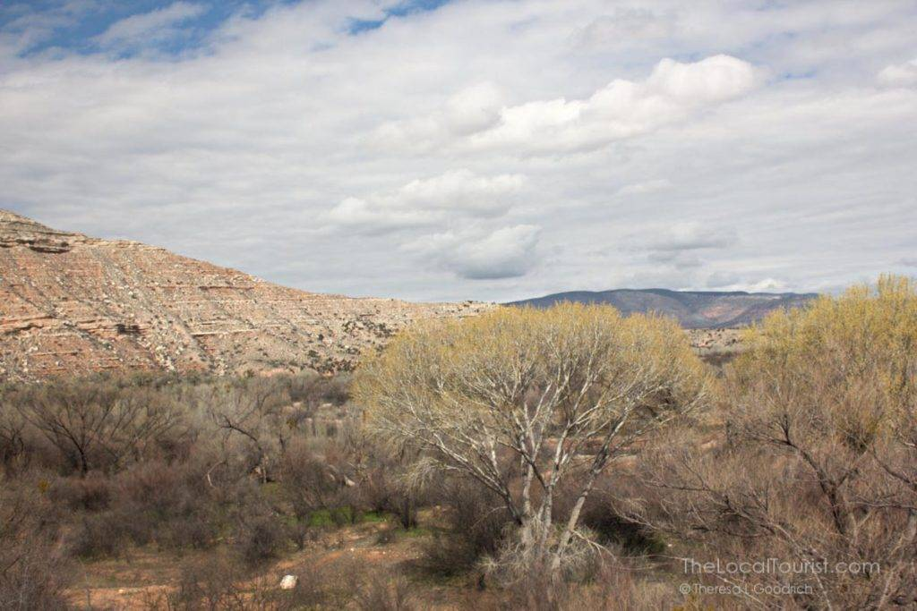 Cottonwoods budding in the Verde Valley