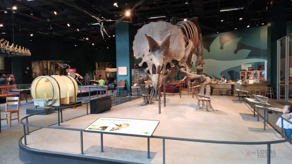 Triceratops Skeleton at Science Museum of Minnesota