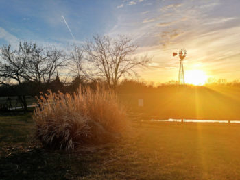 Sunset at Prairie Rose Chuckwagon Supper