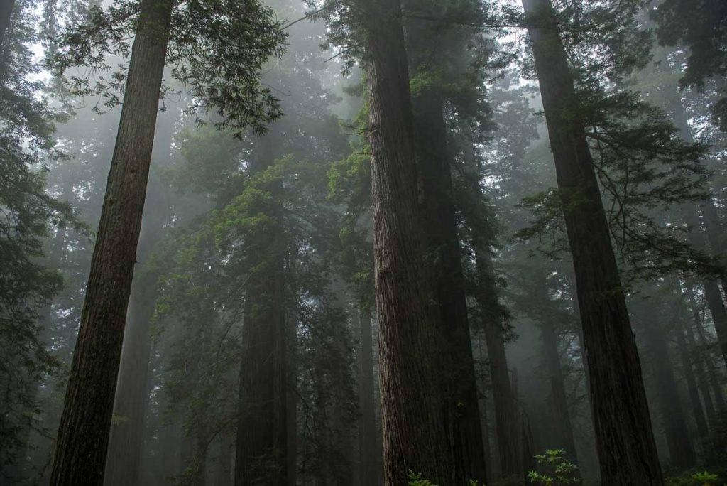 Redwood National Park in California, photo by Tom Bartel, Travel Past 50