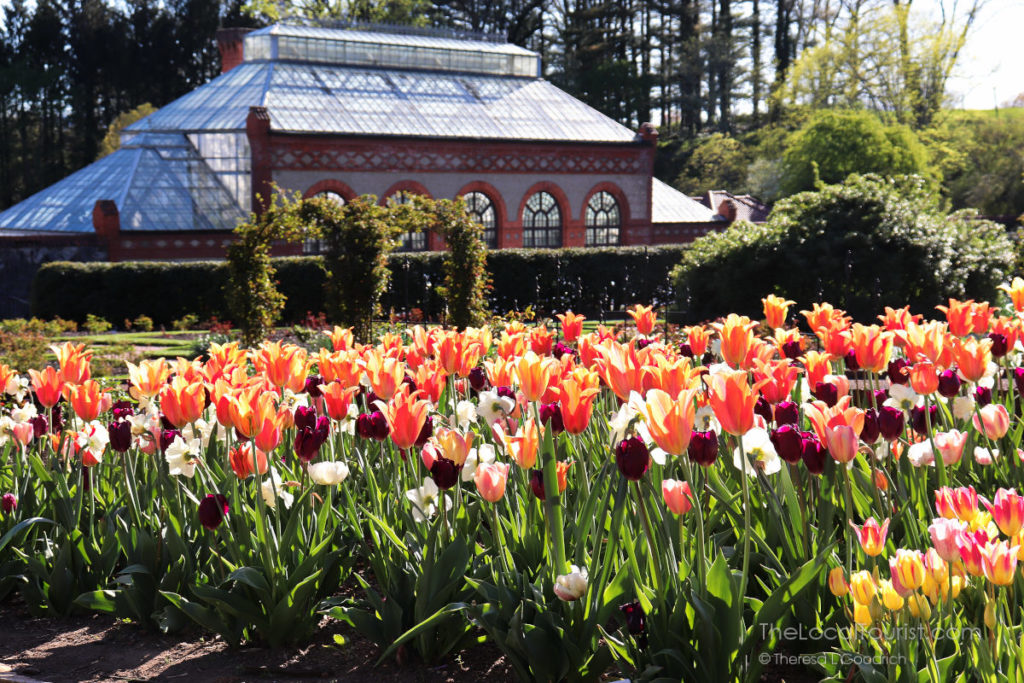 Field of tulips inside the walled garden at the Biltmore in Asheville, North Carolina