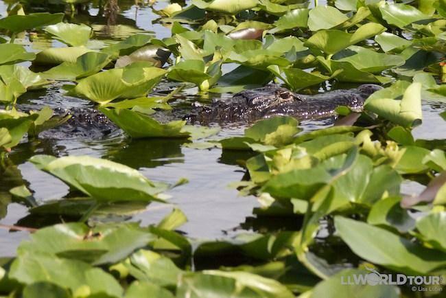 Florida Everglades, photo by Lisa Lubin, LL World Tour