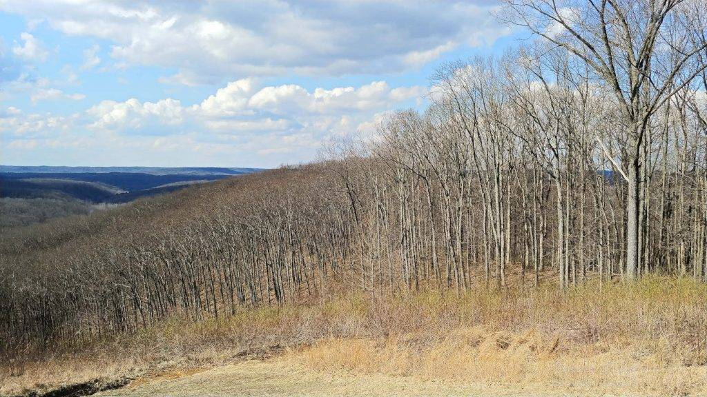 You can see how young the trees are at this overlook in Brown County State Park