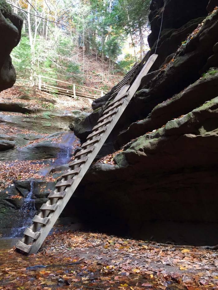 Ladder in Bear Hollow