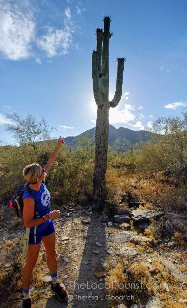 Learning about the saguaro with Linda from Arizona Outback Adventures