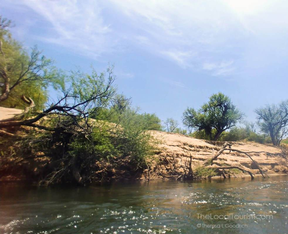 Banks of the Lower Salt River in Tonto National Forest