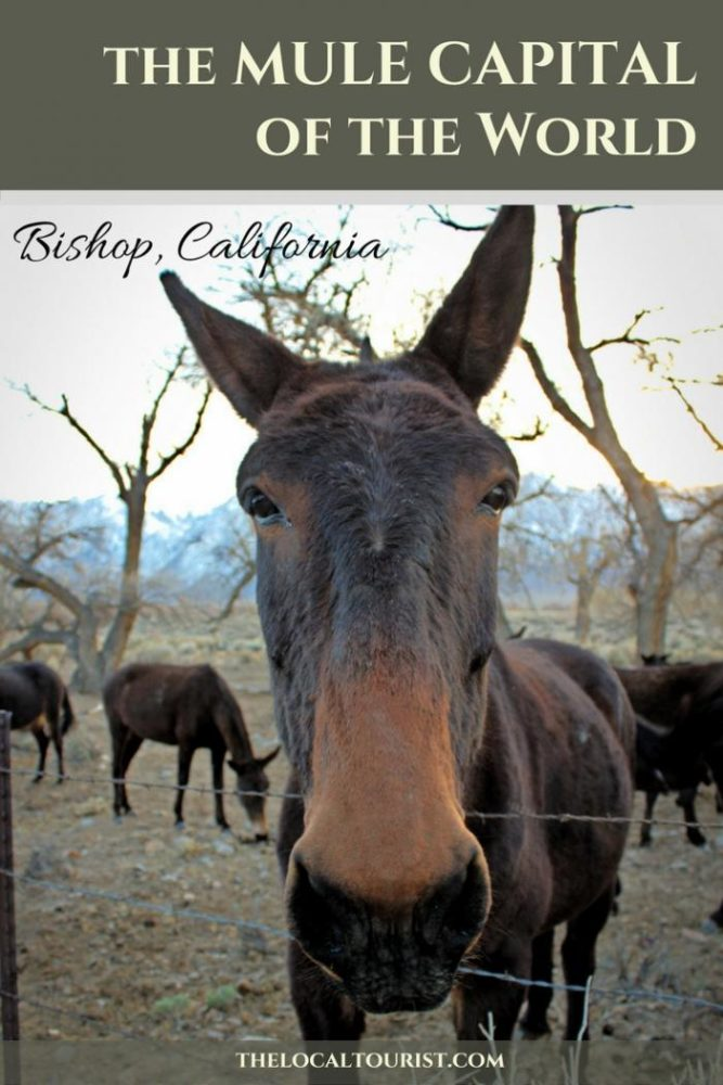 Bishop, California is the gateway to the Eastern Sierras and the Mule Capital of the World. It's a small town with big character and a HUGE backyard.