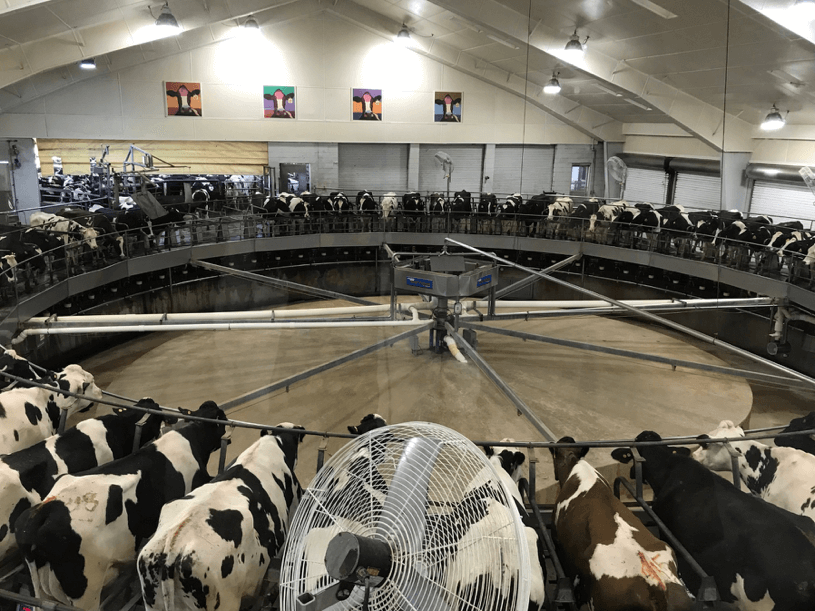 Milking Parlor at Fair Oaks Farm in Indiana