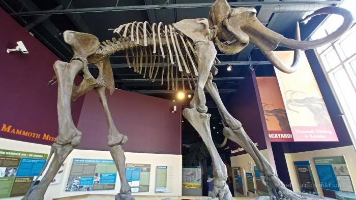 Mammoth skeleton at the Kenosha Public Museum