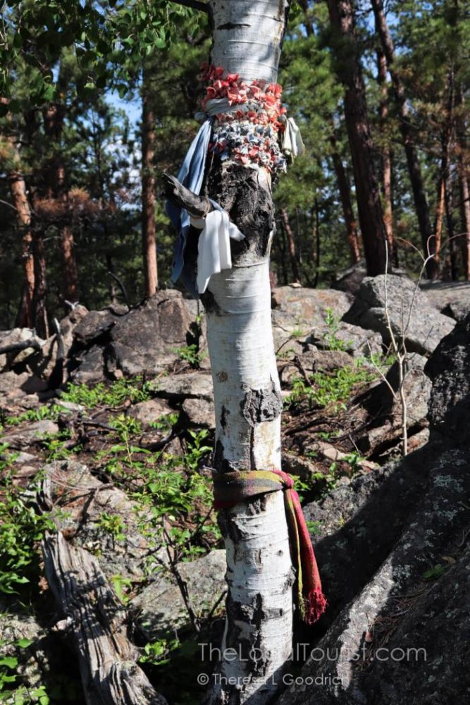 Prayer cloths on a tree at Devils Tower National Monument, Wyoming