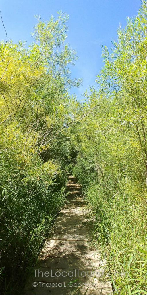 Marsh in Stickney Run Conservation Area